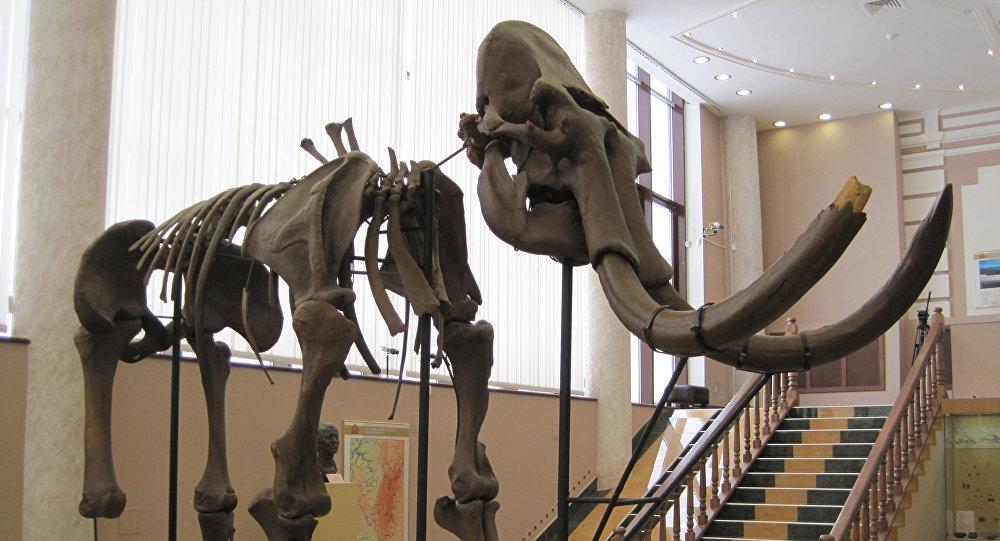 西伯利亚古生物学家发现人与猛犸象共患病