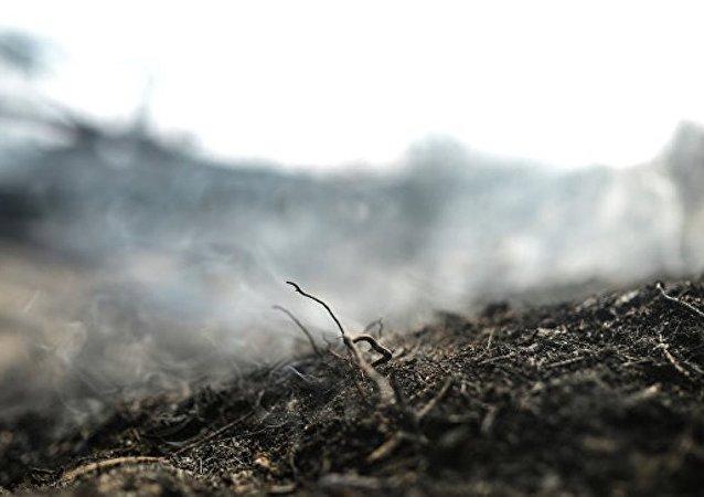 中國企業對俄科米共和國泥炭地開發感興趣