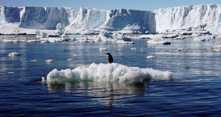 Пингвин Адели на льдине в Антарктиде
