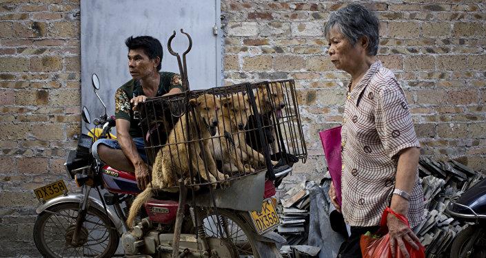 玉林因动物保护组织反对出台吃狗肉禁令