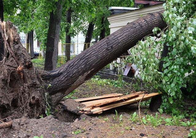 俄紧急情况部统计出暴风给莫斯科带来的损失:15人死亡 200多人受伤 2450辆汽车受损