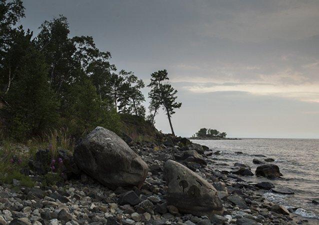 贝加尔湖自然保护检察院对沿岸海豹死因展开调查