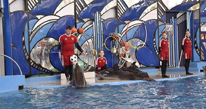 索契神算海豚預言聯合會杯半決賽贏家