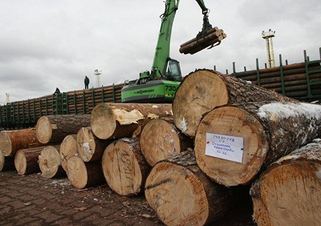 俄中博览会或助哈欧公司获得50万立方米木材运输订单