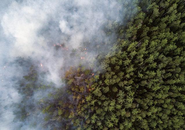俄紧急情况部:森林大火的烟雾笼罩哈巴罗夫斯克