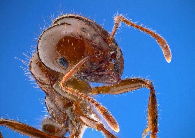 蚂蚁在为世界末日做准备