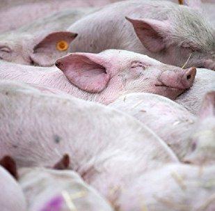 中國養殖業嚴禁使用抗生素