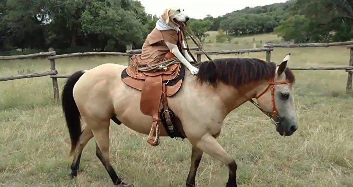 得州女子教狗騎馬