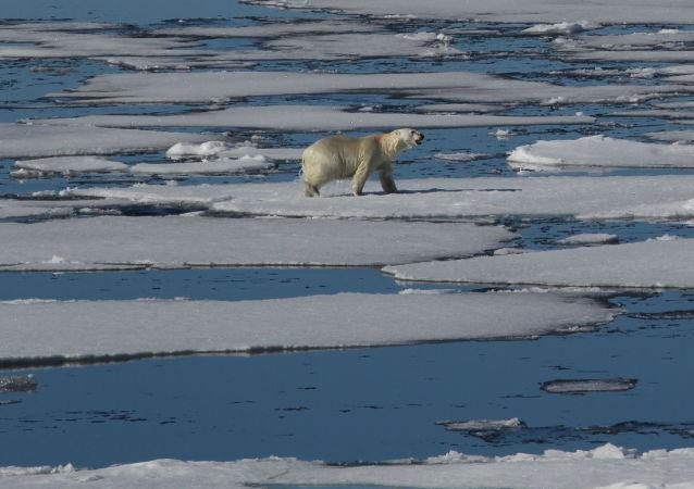 英国旅行家欲乘游艇前往北极