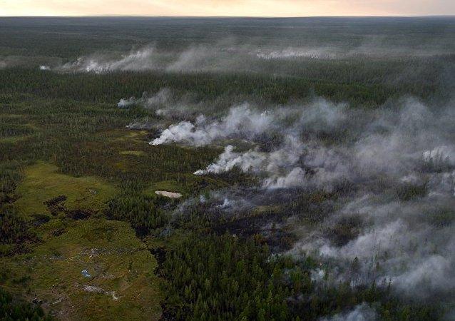 俄萨哈共和国政府将为森林火灾使用人工降雨
