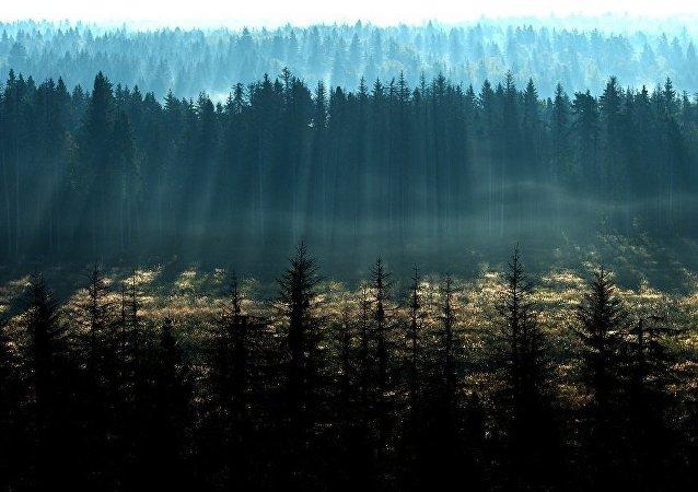 中國自然資源部:中國人工林面積居世界首位