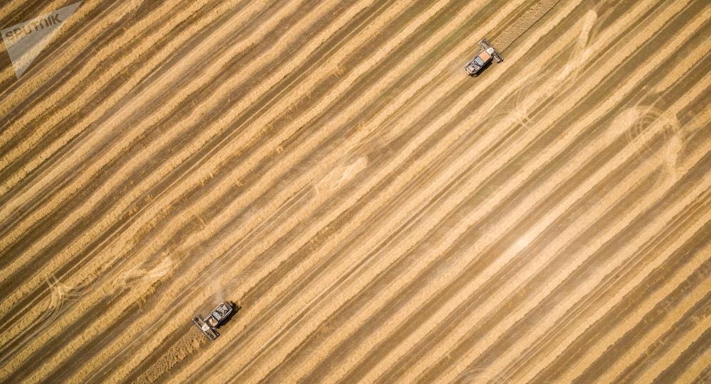 俄農業部預測本農業年度穀物出口量將達5200-5300萬噸
