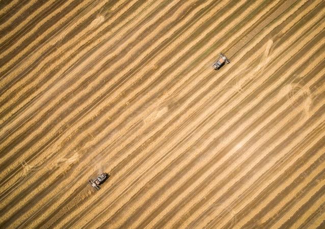 俄农业部预测本农业年度谷物出口量将达5200-5300万吨