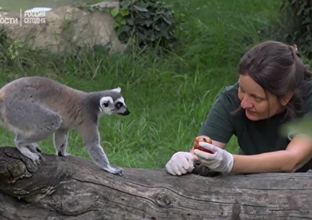 带肉和鱼的冰淇淋将帮罗马动物园中的动物熬过酷暑