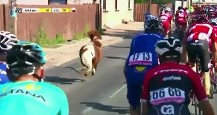 俄罗斯自行车手智胜小矮马