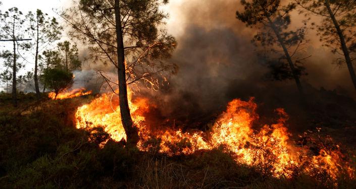 俄紧急情况部愿协助美国扑灭加州大火