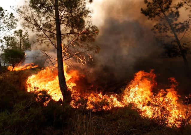 洛杉磯居民因森林火災被迫離家