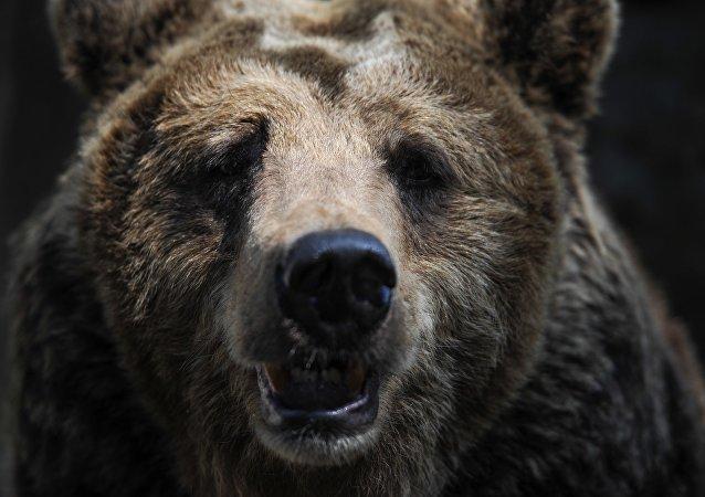 俄羅斯最危險的五種動物