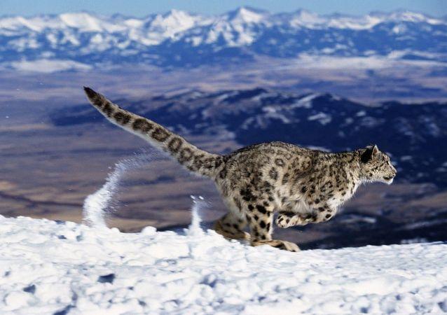 专家列出了保护野生动物最好的国家名单