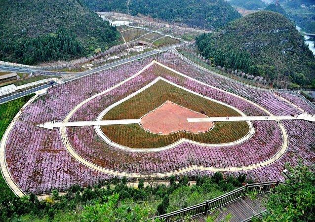 貴州省副省長:今年上半年貴州旅遊收入3140億元人民幣