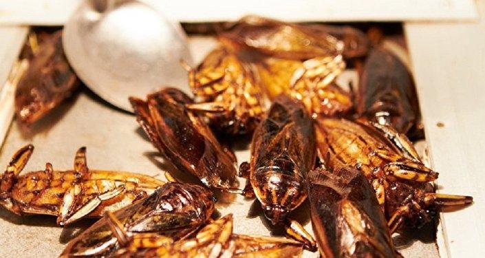 科學家稱吃昆蟲有益健康