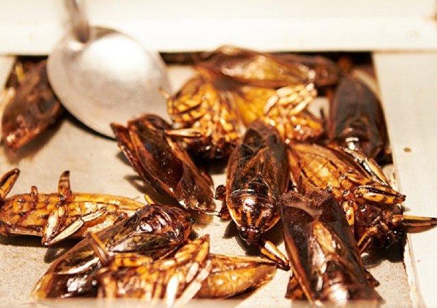 中国专家评欧洲可食昆虫研究