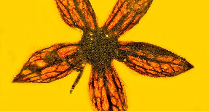 古生物學家在緬甸琥珀里找到上億年前花朵