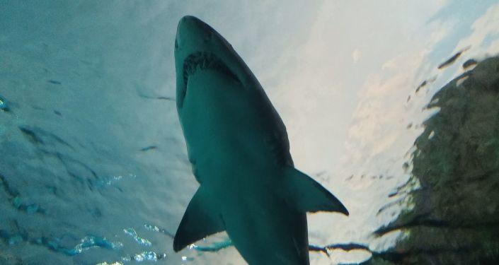 泰国受游客欢迎的海滩因鲨鱼伤人事件被关闭