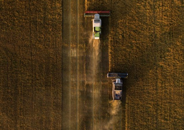 俄阿穆尔州州长:今年该州对华谷物出口量将增加