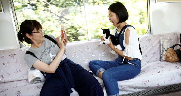 列車咖啡館內的乘客與貓咪合影