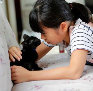 女孩與小貓