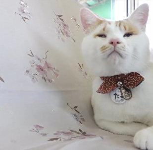 日本一辆客运列车被改造为猫咪咖啡馆