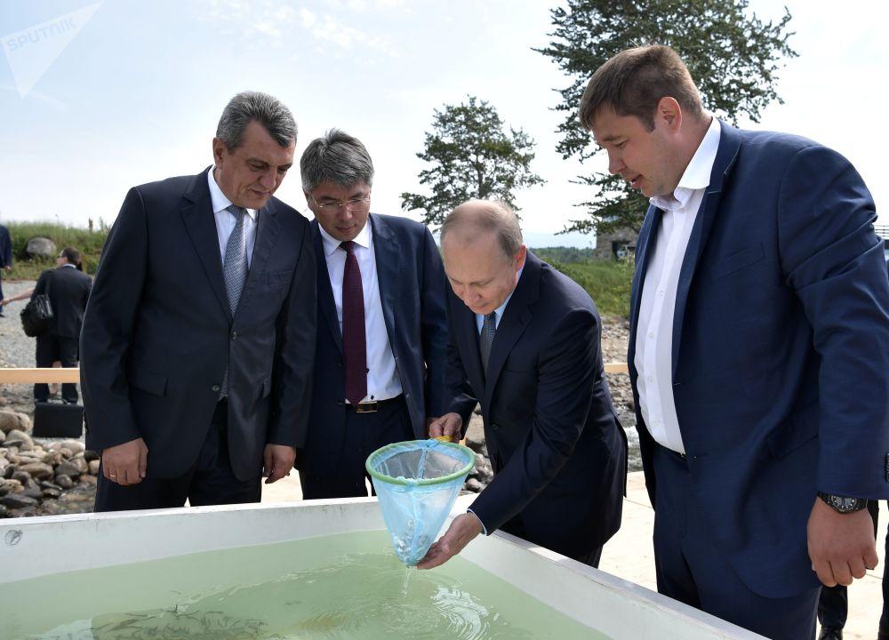 俄羅斯總統普京在貝加爾湖國家自然生物圈保護區出席白鮭魚苗放生儀式。