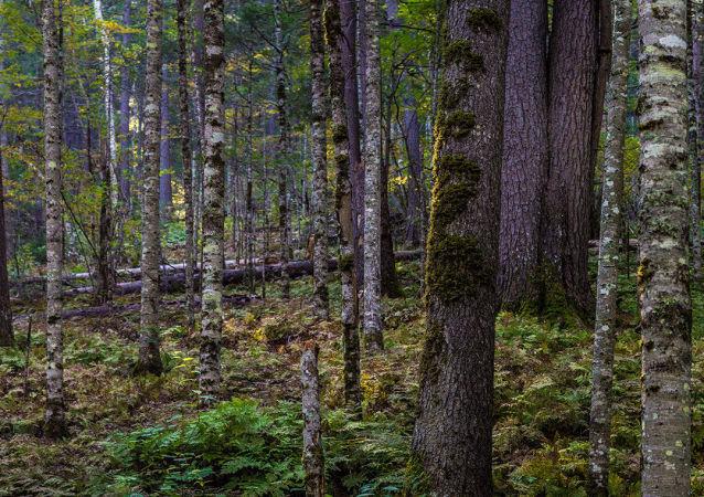 中国将为托木斯克州木材生产投资4.3亿美元