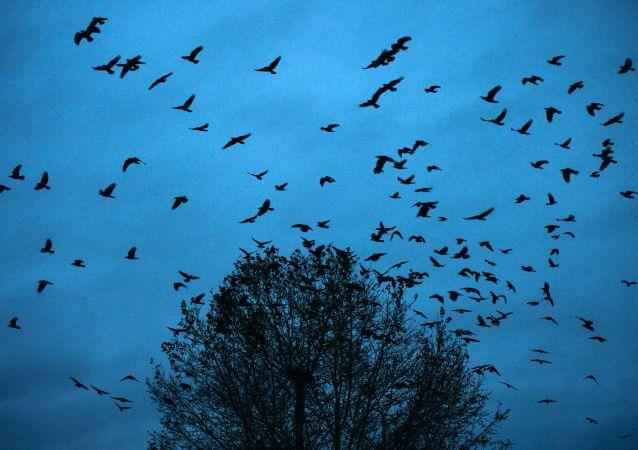 媒体:北美鸟类数量半世纪减少约30%