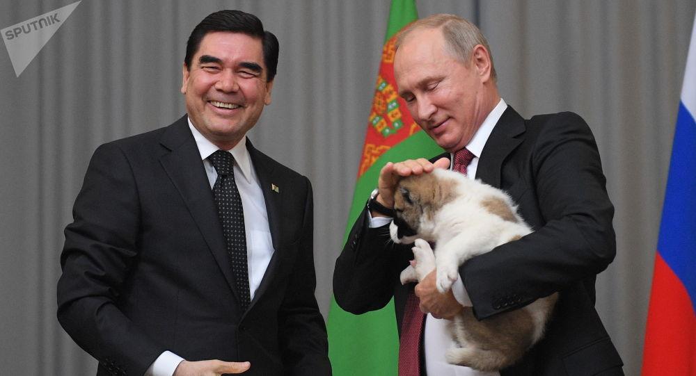 土库曼斯坦总统送俄总统中亚牧羊犬幼崽作生日贺礼
