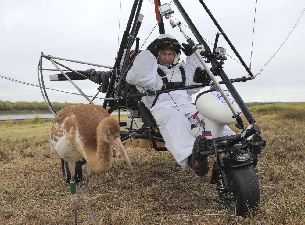 俄联邦总统普京参加保护珍稀动物 - 白鹤的科学实验