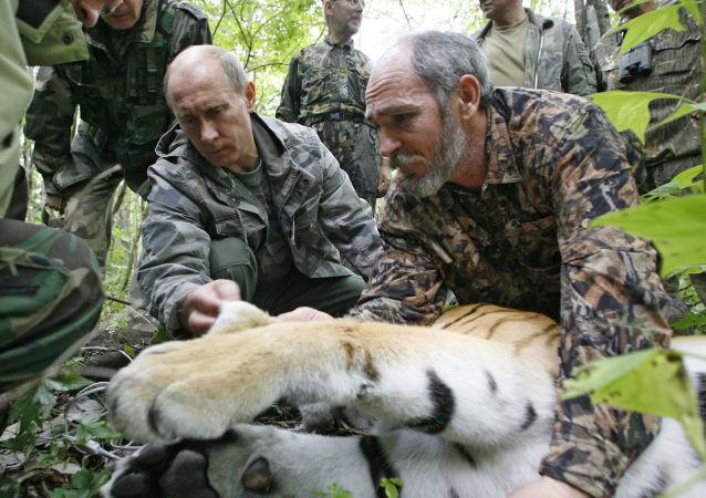 世界自然基金會:中國居民餵食俄總統放生的老虎