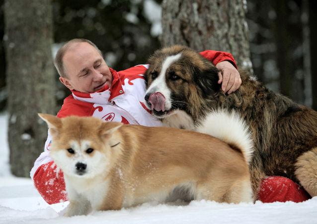 普京簽署人道對待動物的法律
