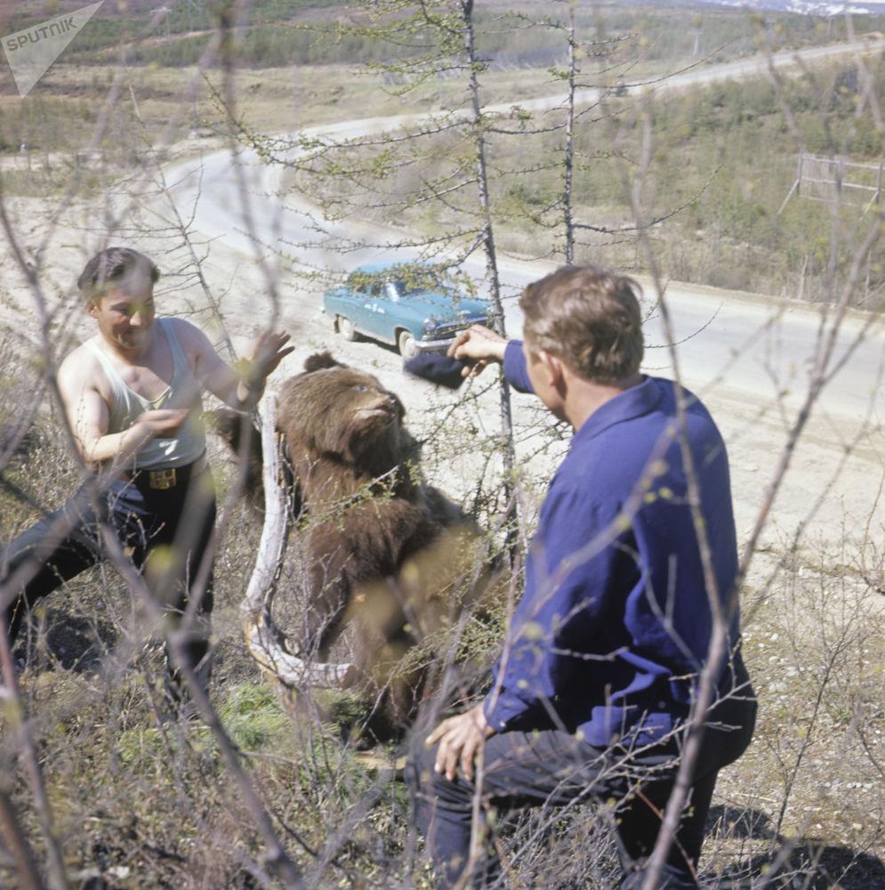 年輕人和熊合影,1967年