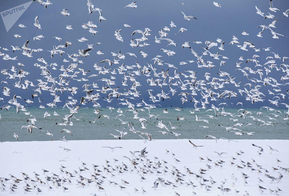 索契海岸的鳥兒