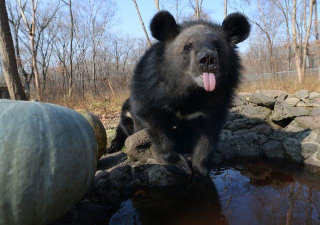美国女子用尖叫声赶走黑熊