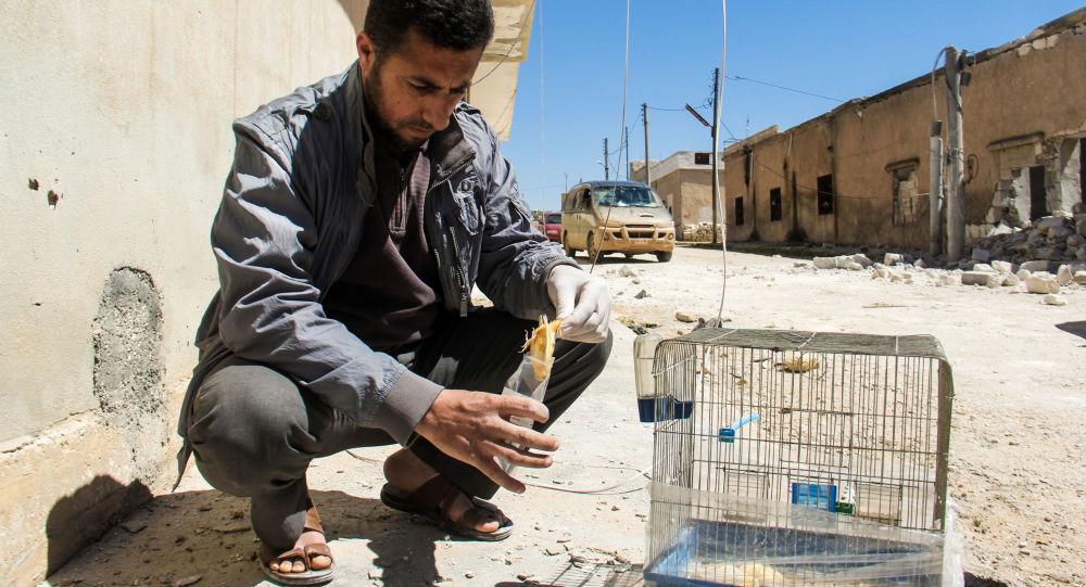 該國在防止敘境內新化武攻擊問題上寄希望於俄羅斯