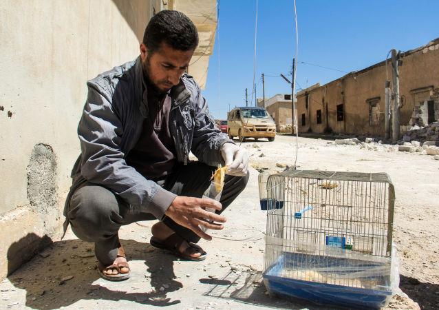 该国在防止叙境内新化武攻击问题上寄希望于俄罗斯
