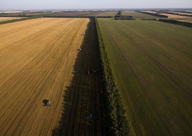 哈爾濱東金集團將在俄投資開發遠東一號現代農業項目