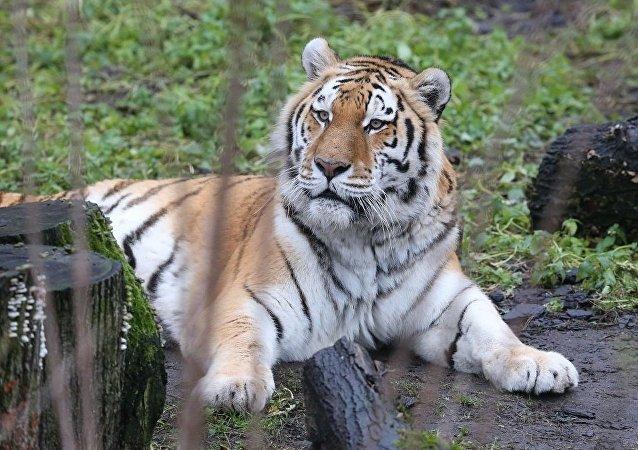 加里宁格勒的动物园