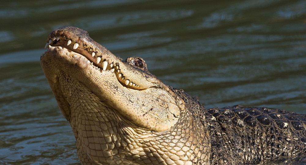 澳大利亚一渔民在鳄鱼区度过两天后获救