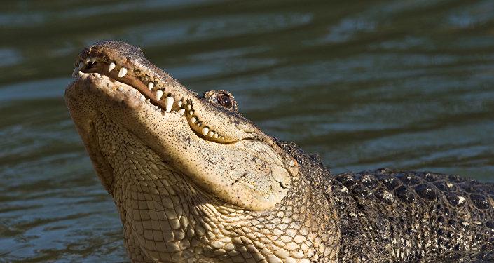 印度500人出席百岁鳄鱼葬礼