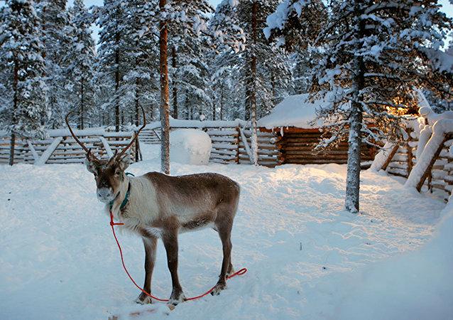 芬兰萨米地区12月将迎来航班高峰,其中包括来自中国的航班