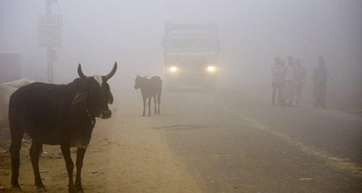 印度德里地區空氣污染指數小幅下降